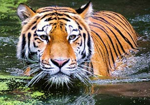 wildlife-tour-packages